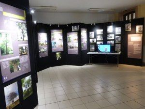 expo arbres reduit